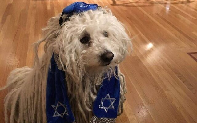 Beast, câinele lui Mark Zuckerberg