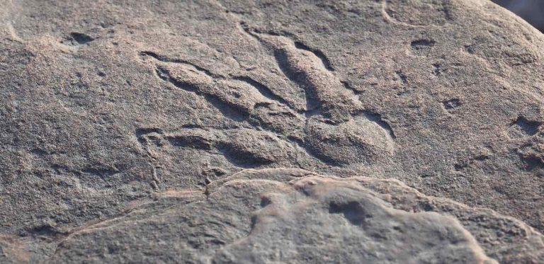 Amprentă de dinozaur
