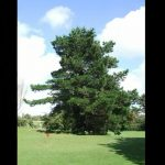 pin de monterey